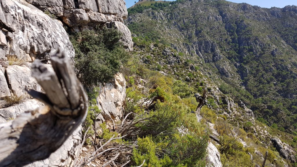 Avanzando por la ladera