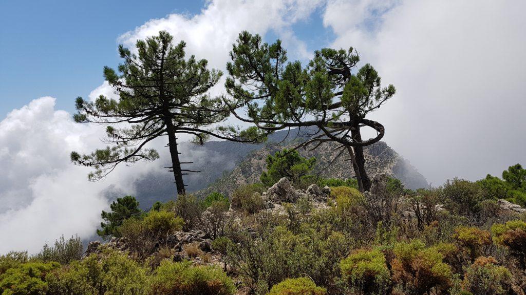 Final del tramo de ladera. Vista a los Altos del Higuerón.