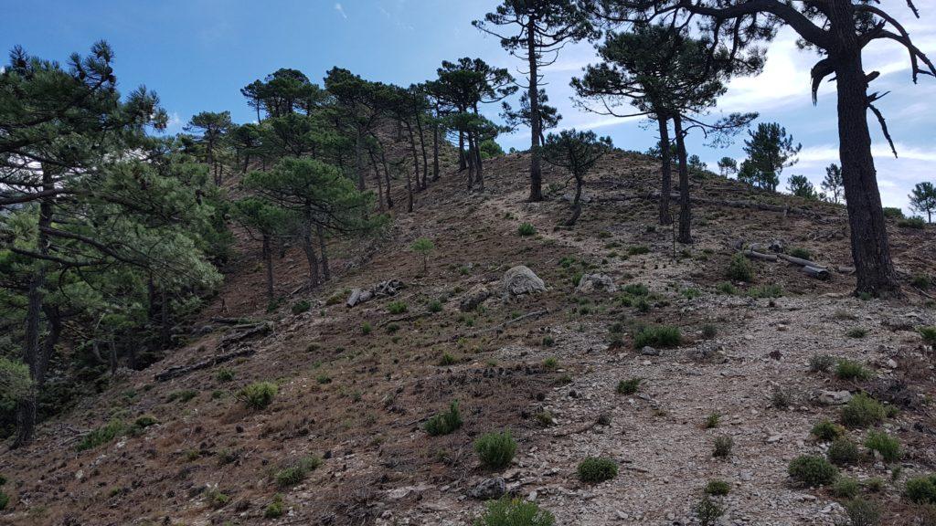 Subida al Cerro del Caracolillo