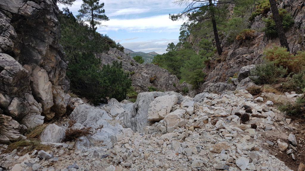 Barranco de las Cuevas. Parte alta