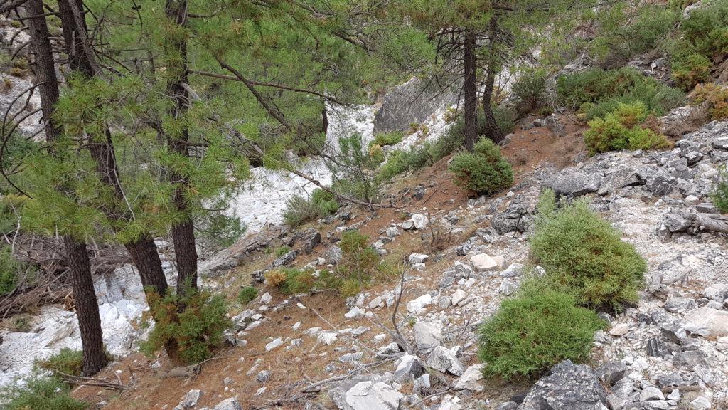 Barranco de las Cuevas. Por la derecha del cauce