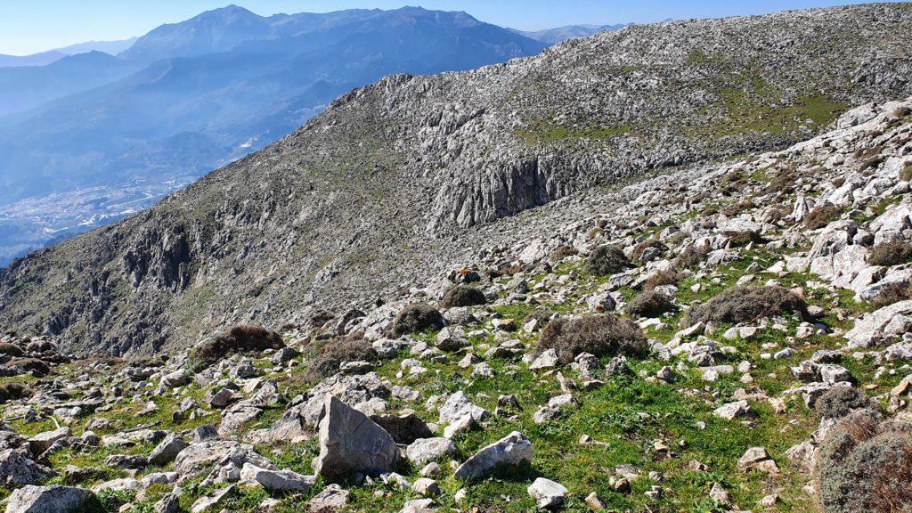 Cañada del Encinar. Vista atrás una vez atravesada
