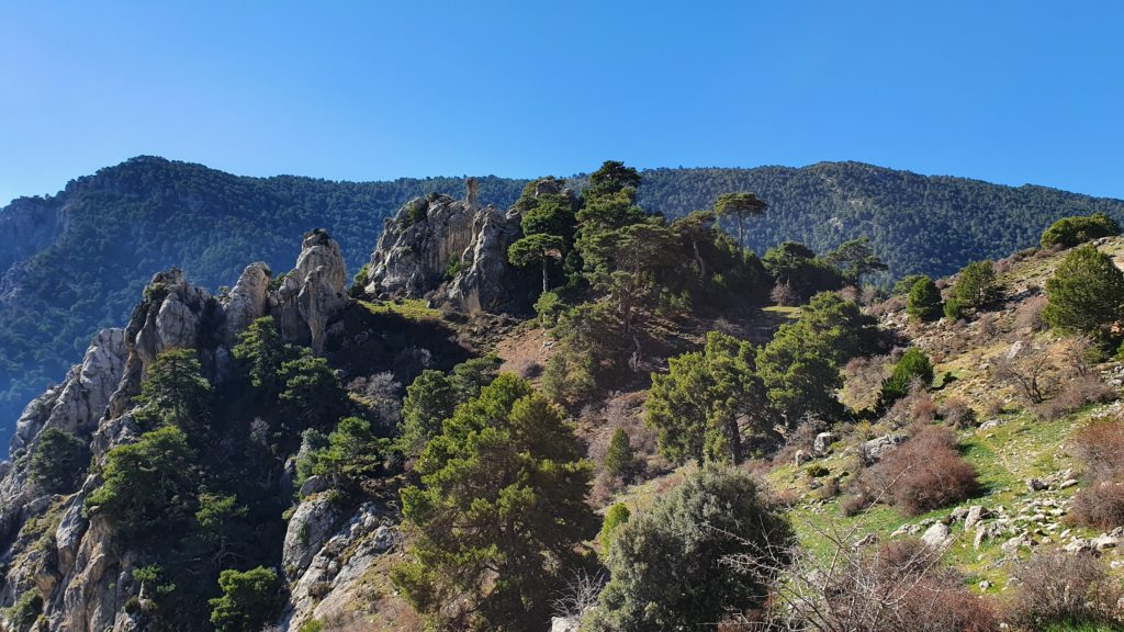 Vista al Collado de la Cueva de los Lobos desde el camino a la Fuentezuela