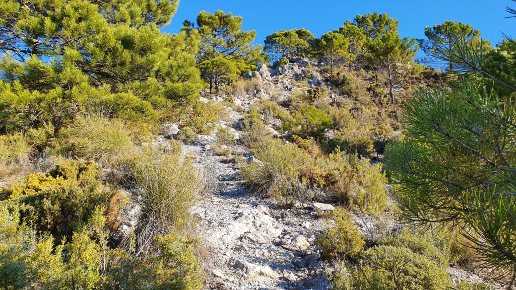 Subiendo hacia Cerro Verde