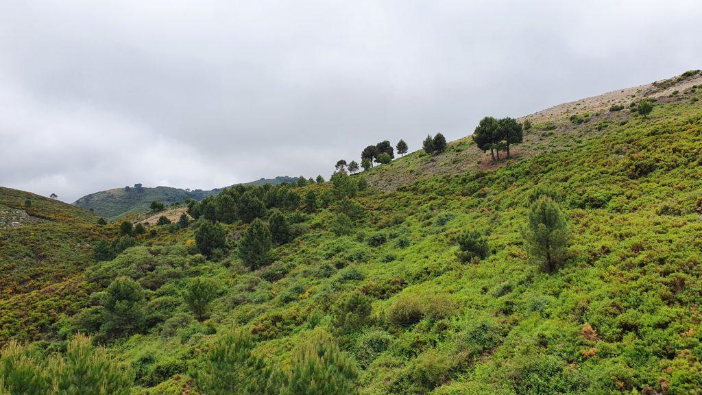 Camino entre vegetación densa