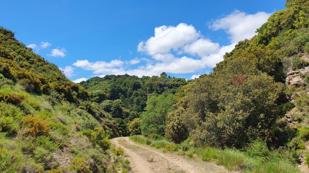 Hacia Barranco de Cabañeros
