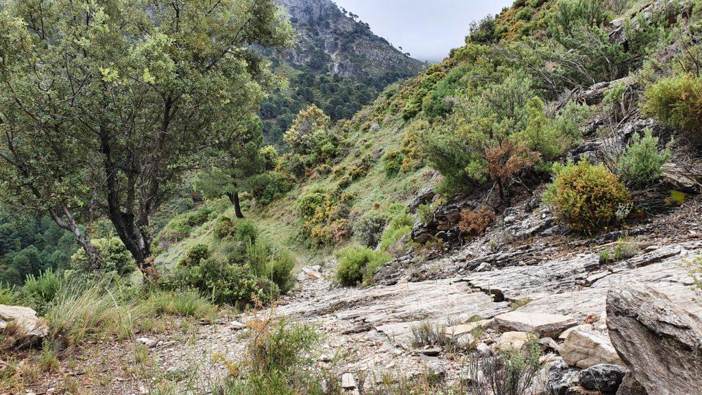 Sendero al Barranco de las Alfajas